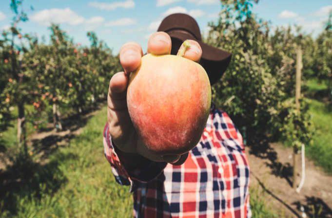 Trabajar en granjas trabajo y ofertas de empleo
